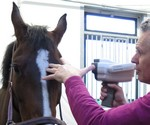 Gegevens verzamelen over paarden oog door JGK.
