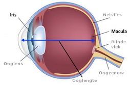 Schematisch oog
